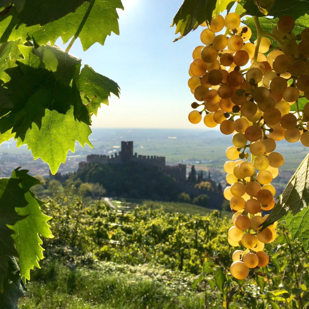 Thoughts on: Soave | Wine Cuentista